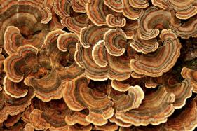 01 Fungi