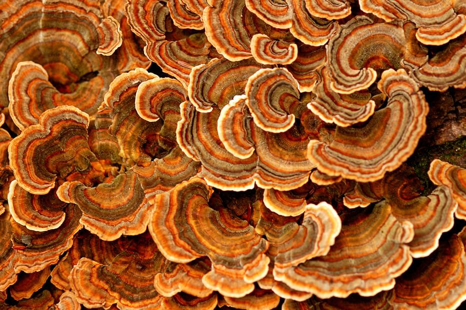 01 Fungi Festival
