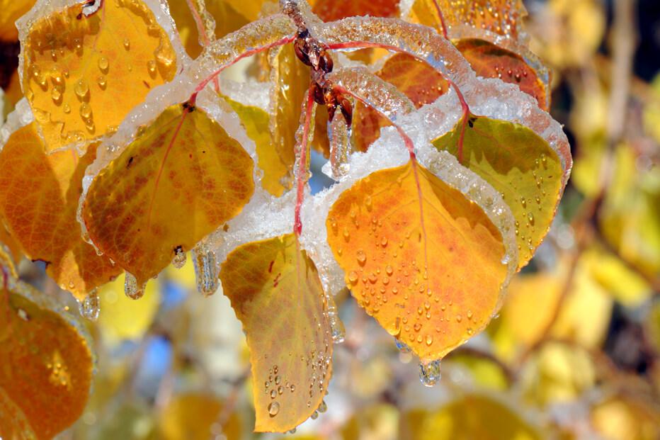 06 Fall Icing