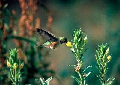 10 Joy Pollinator