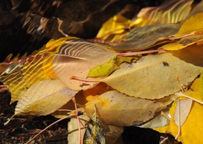 12 Leafmonium